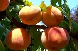 L'UFC-Que choisir dénonce les « marges exorbitantes » de la grande distribution sur les fruits et légumes bio